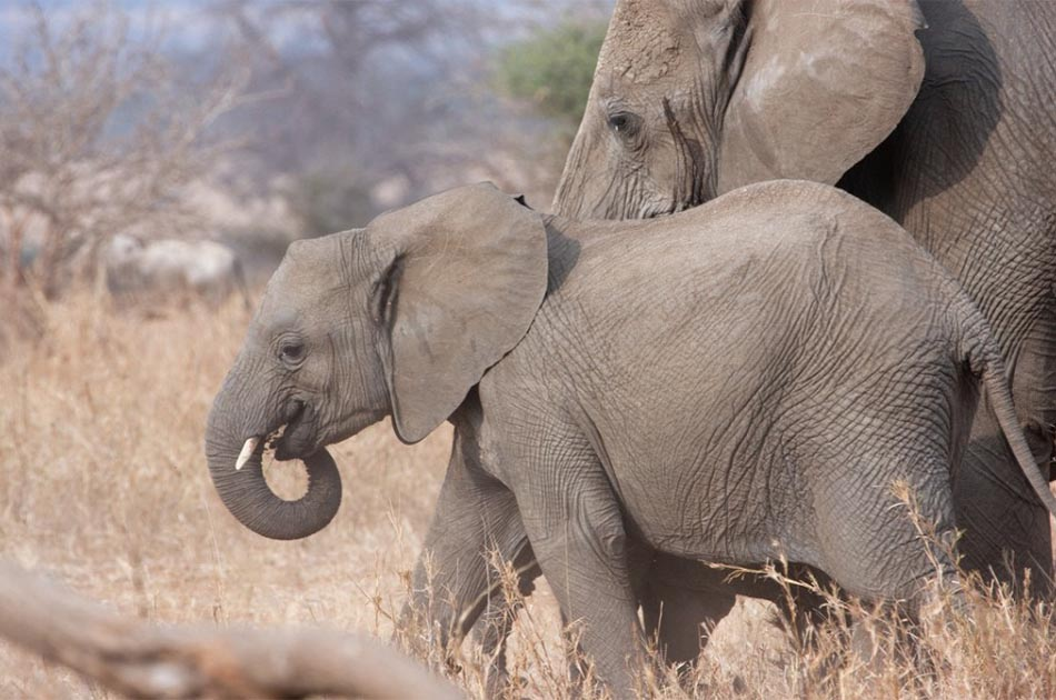 Elephats